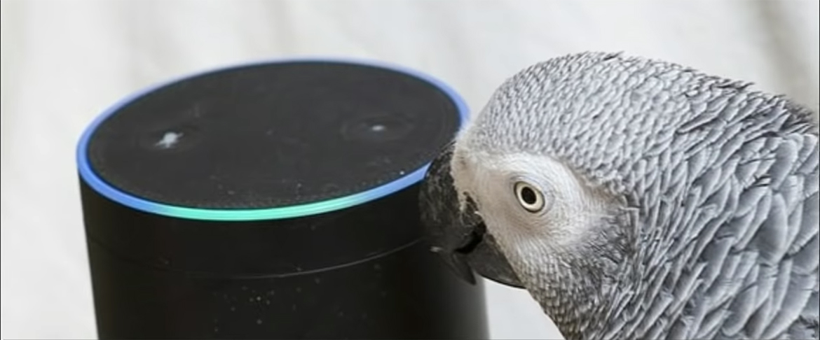 Quand votre perroquet donne des instructions à Alexa, l'assistant vocal d'Amazon